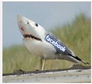 Facebook lIfeguard